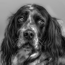 My mate by Brian Noel - Animals - Dogs Portraits