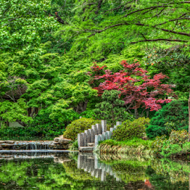 Ataraxia by Tom Weisbrook - Nature Up Close Gardens & Produce ( water, calm, japanese garden, peaceful, green, waterfall, texas, botanical, spring, maple, ft. worth, trees, pond, garden )