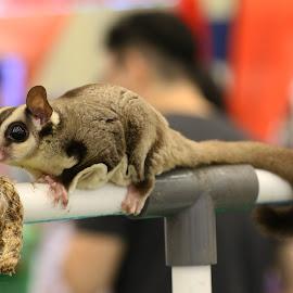 Cute by Bernard Tjandra - Animals Other Mammals