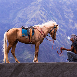 The Horse Man by Rahmad Hidayat - People Professional People ( tengger, indonesia, horse, east java, java, bromo, mt. bromo, people, man )