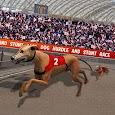 Dog Hurdle and Stunt Race