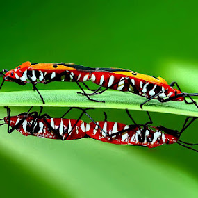 2 couples by Farid Wazdi - Animals Insects & Spiders