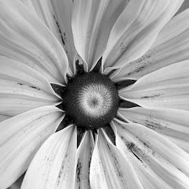 Flower by Asif Bora - Black & White Flowers & Plants