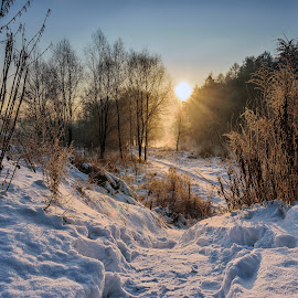 In to sun by Witold Steblik - Landscapes Forests ( winter, white, frost, sunrise, sun )
