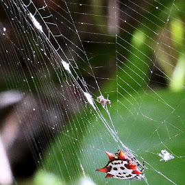 Caught! by Marty Cutler - Nature Up Close Webs ( webs, nature up close, nature close up, web, spider web )