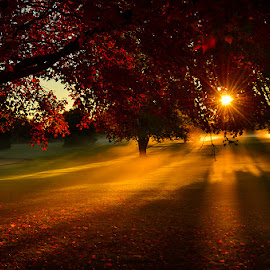 Golden rays by Luis Uribe - Landscapes Sunsets & Sunrises ( sunrises, fall, fall trees, sun rays )