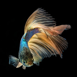 Lets Dance by Arya Suartawan - Animals Fish ( #beta #animal #photography #macro #bali )