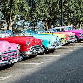 Line-up by Richard Michael Lingo - Transportation Automobiles ( automobiles, vintage, cars, transportation, cuba )