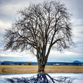Reflection  by Todd Reynolds - Nature Up Close Trees & Bushes