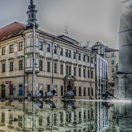 Brno Pigeons by Adam Lang - City,  Street & Park  Street Scenes ( water, pigeons, brno, building, splash, fountain, reflections )