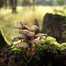 Mushrooms by Renata Zemanová - Nature Up Close Mushrooms & Fungi ( stump, wood, forest, mushrooms )