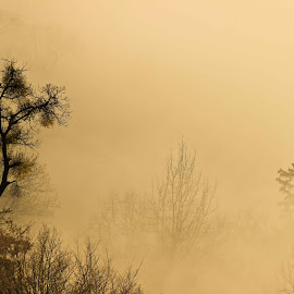 Trees in fog by Comsa Bogdan - Nature Up Close Trees & Bushes ( fog, comsa bogdan, beautiful, trees, sunrise, photography, brasov )