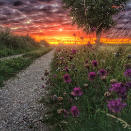 Dirt road into golden sunset by Anci Alverborg - Instagram & Mobile Android ( moblie, sweden, hdr, sunset, road, öland )
