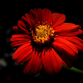 by Parvesh Rana - Nature Up Close Flowers - 2011-2013