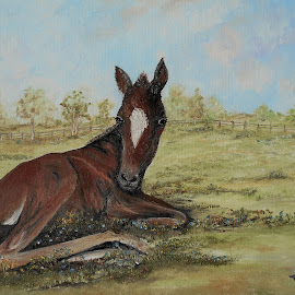 Polo Pony by Rhonda Lee - Painting All Painting ( pony, unique, colt, art, horse, rokinronda, baby, cute, painting, animal )