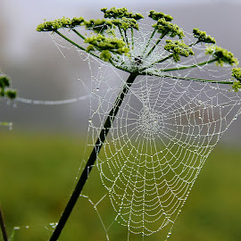 Autumn by Eugenija Seinauskiene - Nature Up Close Webs