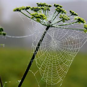 Autumn by Eugenija Seinauskiene - Nature Up Close Webs