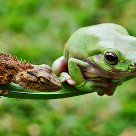 by Sigit Purnomo - Animals Amphibians