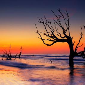 Timeless by Ken Smith - Landscapes Sunsets & Sunrises ( sunrise, landscape, south carolina, bulls island )
