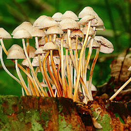 Regroupement by Gérard CHATENET - Nature Up Close Mushrooms & Fungi