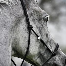 by Lisa Dean - Animals Horses (  )