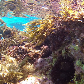 Underwater by Arber Shkurti - Novices Only Landscapes