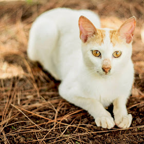 kitty cat.jpg