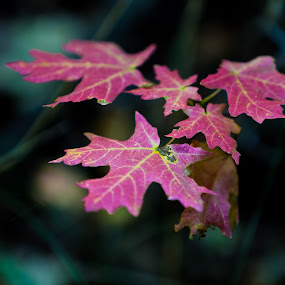 Fall by Muzo Gul - Nature Up Close Leaves & Grasses ( pwcfallleaves, fallen, fall, leaf, leaves )