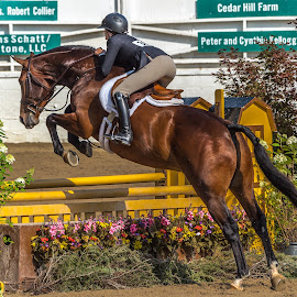 Taken a Fence by Mike Watts - Sports & Fitness Other Sports ( hunter, jumping, horse )