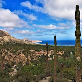 by Phil Bear - Landscapes Deserts ( hills, desert, mexico, beach, cactus, baja, sea of cortez )