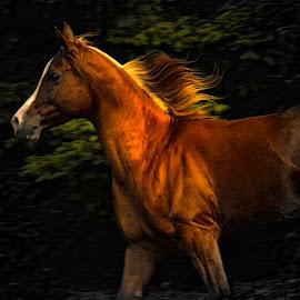 Running through the woods  by Richard Wilson - Animals Horses