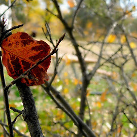 Red leaf by Anwyn Robinson - Nature Up Close Leaves & Grasses ( plant, orange, red, park, nature, tree, branch, leaf, hike )
