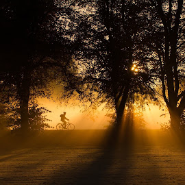 Morning commute  by Phil  Cross - Landscapes Sunsets & Sunrises ( warm, bike, cyclists, cycling, trees, rays, sun, bicycle, mist )