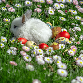 Easter time by Marius Turc - Public Holidays Easter