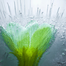 Flower in Ice by Noel S McCormack - Abstract Macro