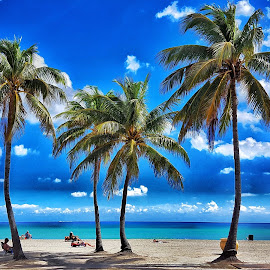 Day at the Beach by Michael Villecco - Landscapes Beaches ( palm trees, hollywood, ocean, sandy, beach )