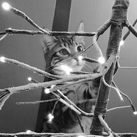 I see the Light by Lori Fix - Black & White Animals