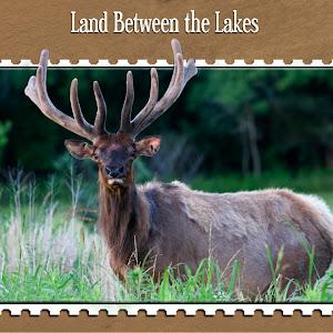 elk stamp card front v2.jpg