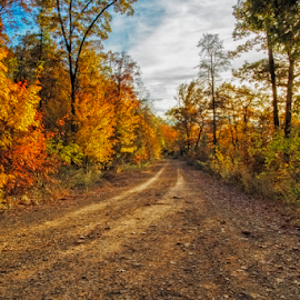 Back Road by Michael Buffington - Transportation Roads ( orange, colorful, green, white rock mountain, road, yellow, rough, rural, environment, red, nature, autumn, blue, fall, natural, arkansas )