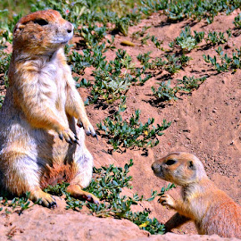 by Linda Woodworth Sulla - Animals Other Mammals