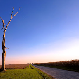 the lone ranger by Fraya Replinger - Nature Up Close Trees & Bushes ( tree, road, evening, rural, corn, country )