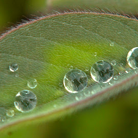 by ERFAN AFIAT SENTOSA - Nature Up Close Natural Waterdrops