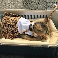 고양이에게 옷을입히면