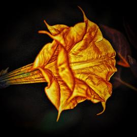 Gold Datura  by Darrell Tenpenny - Digital Art Things