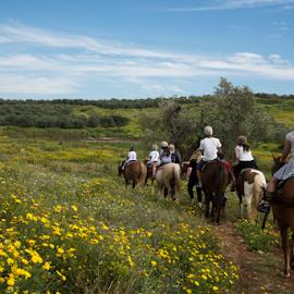 Ride the field by Yuval Shlomo - Animals Horses