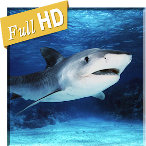Real Tiger Shark 3D HD LWP for PC-Windows 7,8,10 and Mac