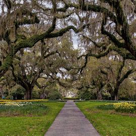 Brookgreen Gardens by Carol Plummer - City,  Street & Park  City Parks