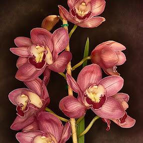by Al Duke - Flowers Flower Arangements ( otchid, flower )