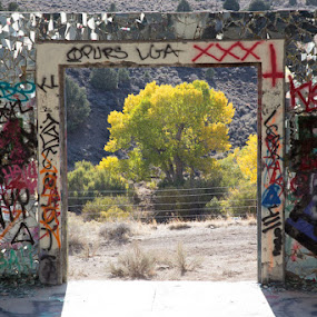 American Flats in the Fall by Susan Koppel - Buildings & Architecture Decaying & Abandoned ( urban, graffiti, fall, american flats, abandoned )