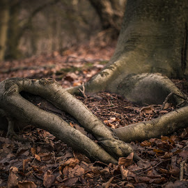 Perry Wood Roots by Dan Horton-Szar ARPS - Nature Up Close Trees & Bushes ( countryside, tree, root, kent, perry wood )